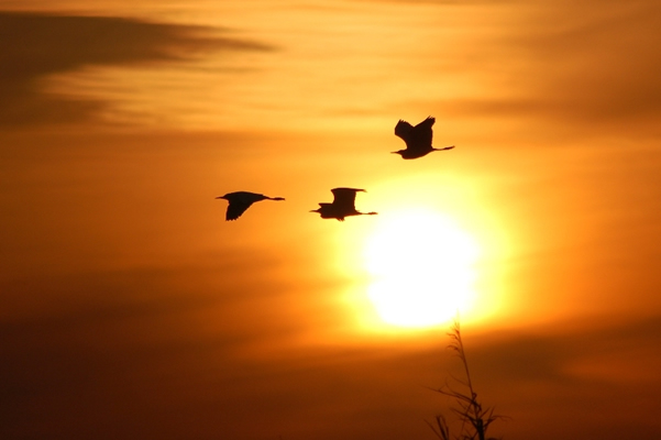 Photo: birds flying in front of sunset