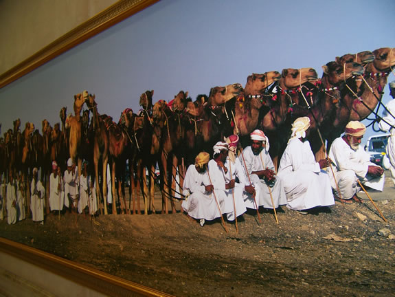 Natives with Camel herd